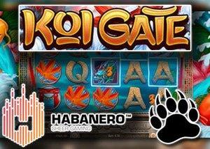 new koi gate slot habanero casinos