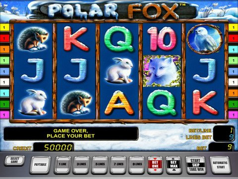 Polar Fox Polar Game Preview