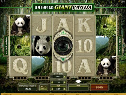 Untamed Giant Panda Game Preview